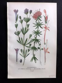 Edward Step 1897 Botanical Print. Crossworths